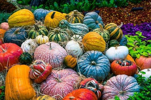 fruits et légumes dans un jardin