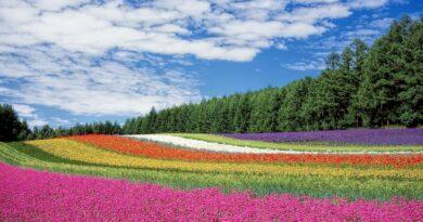 Champ de fleur multicolore